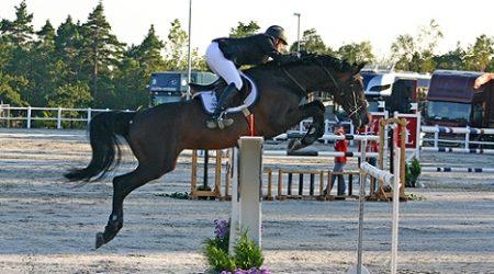 Norwegian Senior Champion - Internationally successful